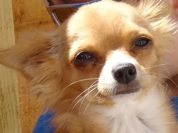 Dog Names Chihuahua Puppies