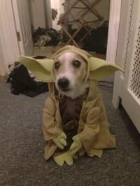 17 Costumes That Prove Jack Russells Always Win At Halloween