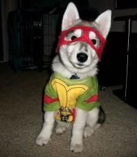 17 Costumes That Prove Huskies Always Win At Halloween