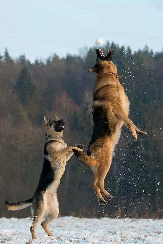 Only German Shepherds! These 12 Things Will Shock You