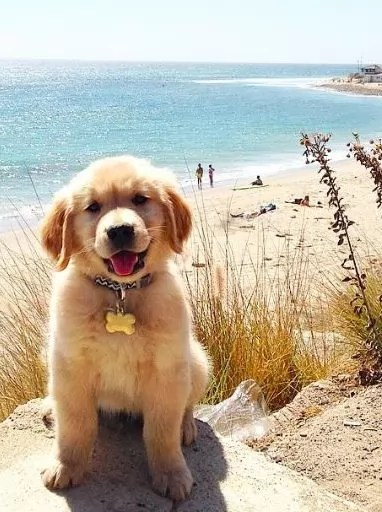 Rottweiler Fall Wallpaper 14 Things That Make Golden Retrievers Happy