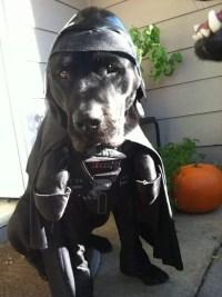 17 Best Labrador Halloween Costume Ideas