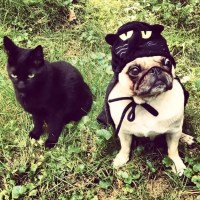 24 Pug Halloween Costumes That Are So Cute We Can't Even