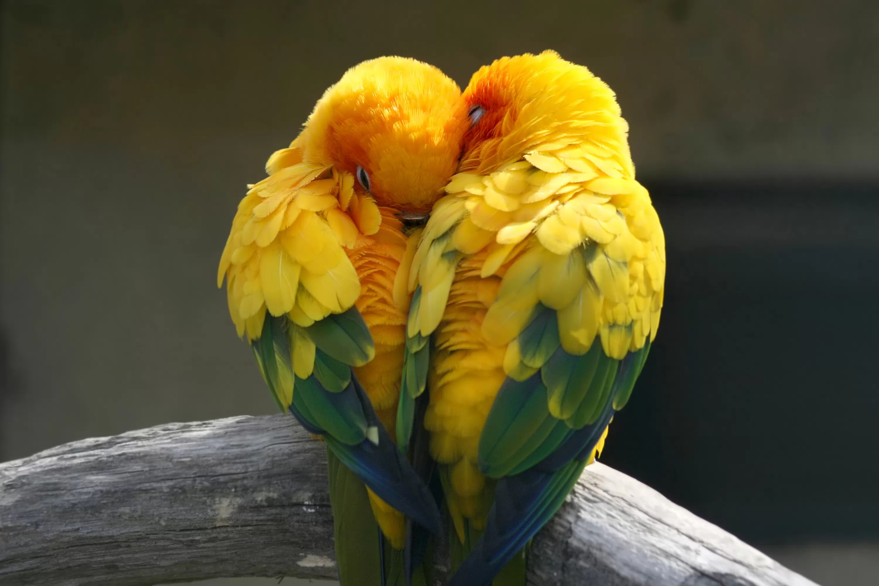 Cute And Romantic Wallpapers Feel Them 5 Facts About Lovebirds Buzzsharer Com