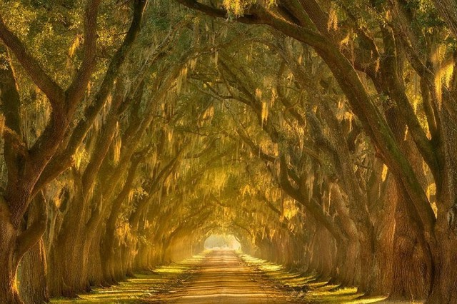 amazing-tree-tunnels-18-934x
