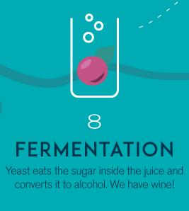 8-fermentation