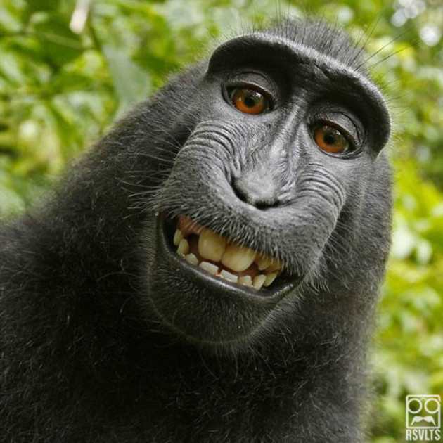 Animals-Taking-Selfies-47-of-50-630x630