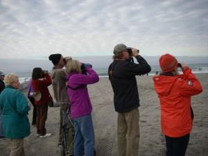 Birding Oside Beach 2