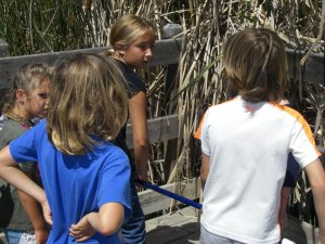 summer camp 2016 collecting insects from lagoon