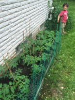Planting veggies.