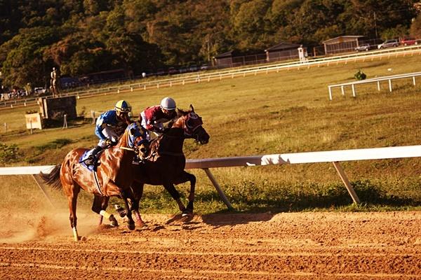 horse-racing-4