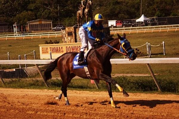 horse-racing-9