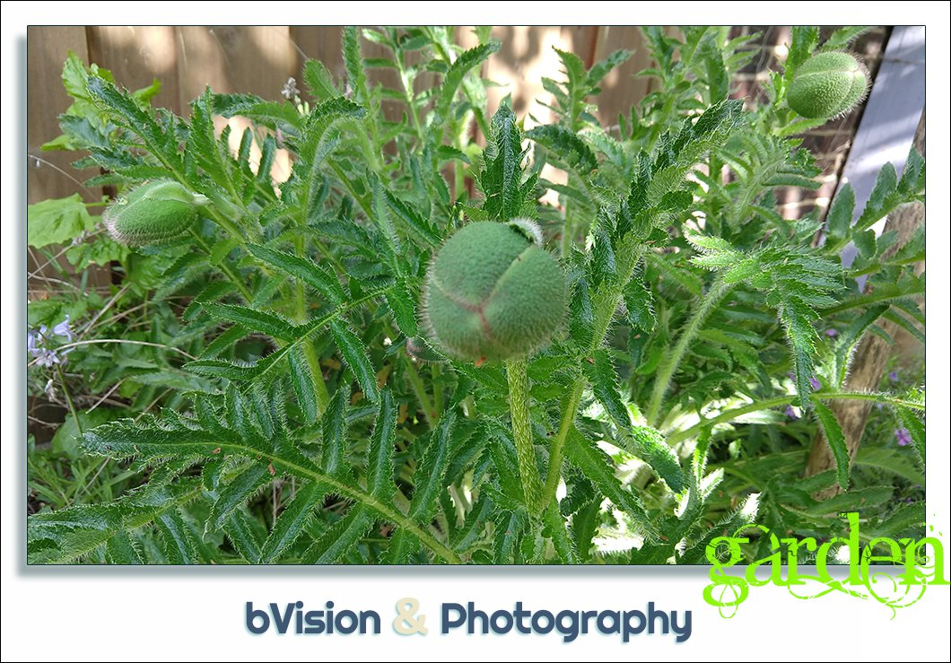 bVision & Photography