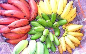 Бананы для похудения подходят или нет