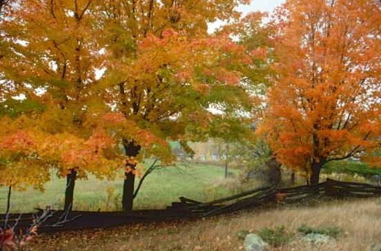 Heney automne 96