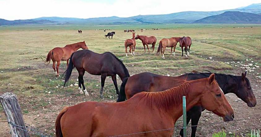 Dude Ranch Horses