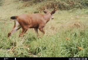 This was taken in the draw on 11-10-2013  at 1038.  Last time he was caught on a trail cam!