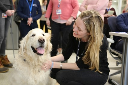 Employee petting golden retriever at Brigham and Women's Hospital.