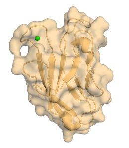 Human TIM3 with bound Calcium