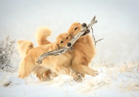 1_branch_managers