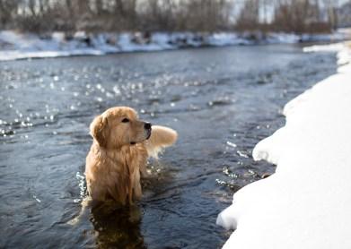 rico_cold_river