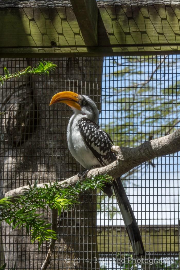 2014 Egg Safari at Zoo Miami - April 20, 2014 00021