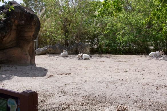2015 Dino Egg Safari-3022