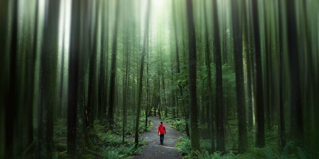 Creating An Epic Forest Blur Effect In Photoshop!
