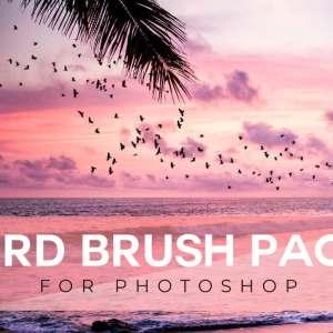 bird brush for photoshop