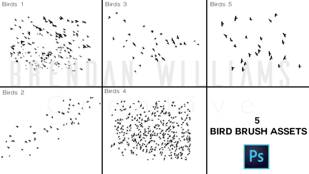 birdsbrushpack_promophoto_thumbnail2 copy