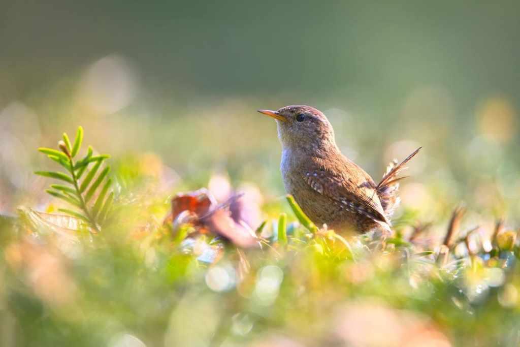 wildlife-photography-of-bird