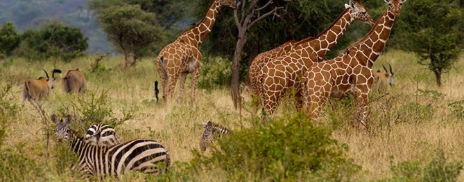 meru-national-park-as-a-wildlife-safari