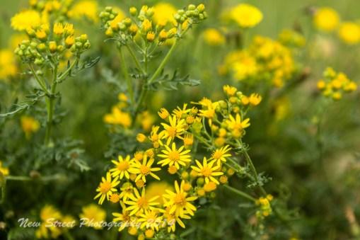 Wild flowers grow everywhere