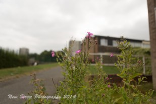 Propagated flowers