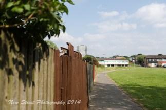 Large wooden fences