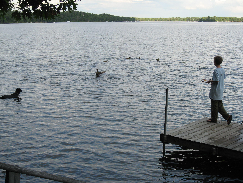 Dog vs. Duck, Bay Lake
