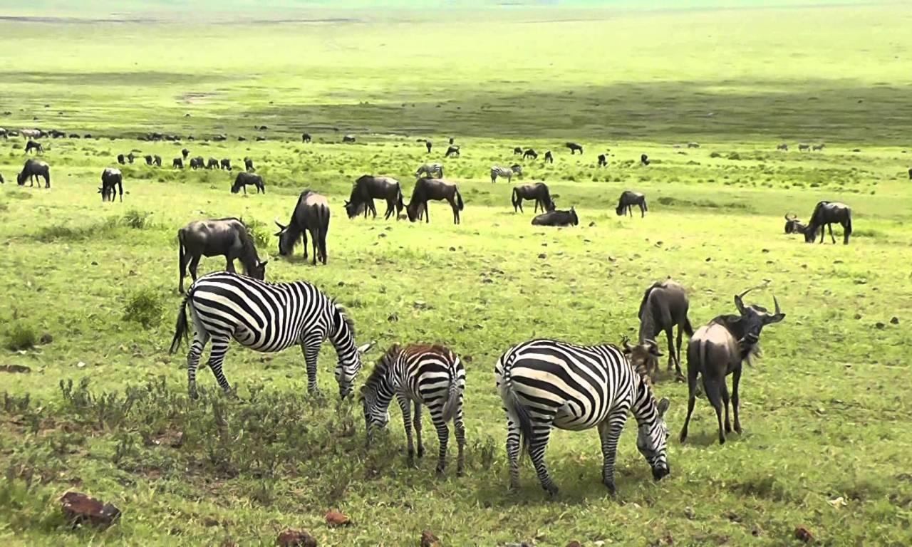 Tarangire and Ngorongoro Crater Safari, 3 Days