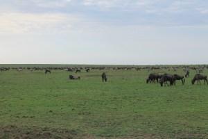 Ngorongoro and Manyara Safari