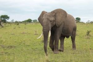 Northern Tanzania Safari, 5 Days