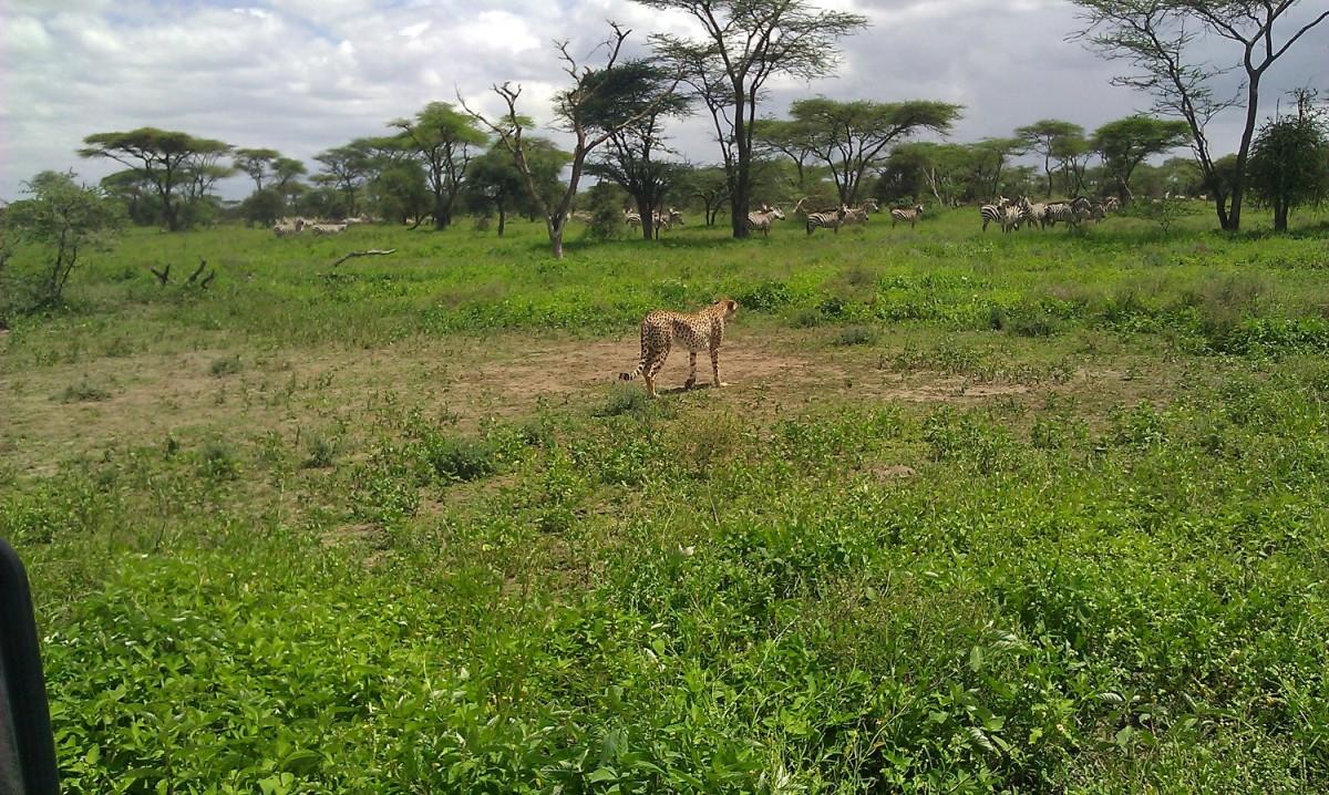 Serengeti Camping Safari, 4 Days