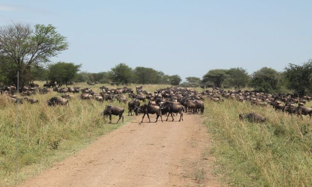 Wildebeest Migration Safari, 4 Days