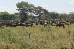 Serengeti and Ngorongoro Safari,