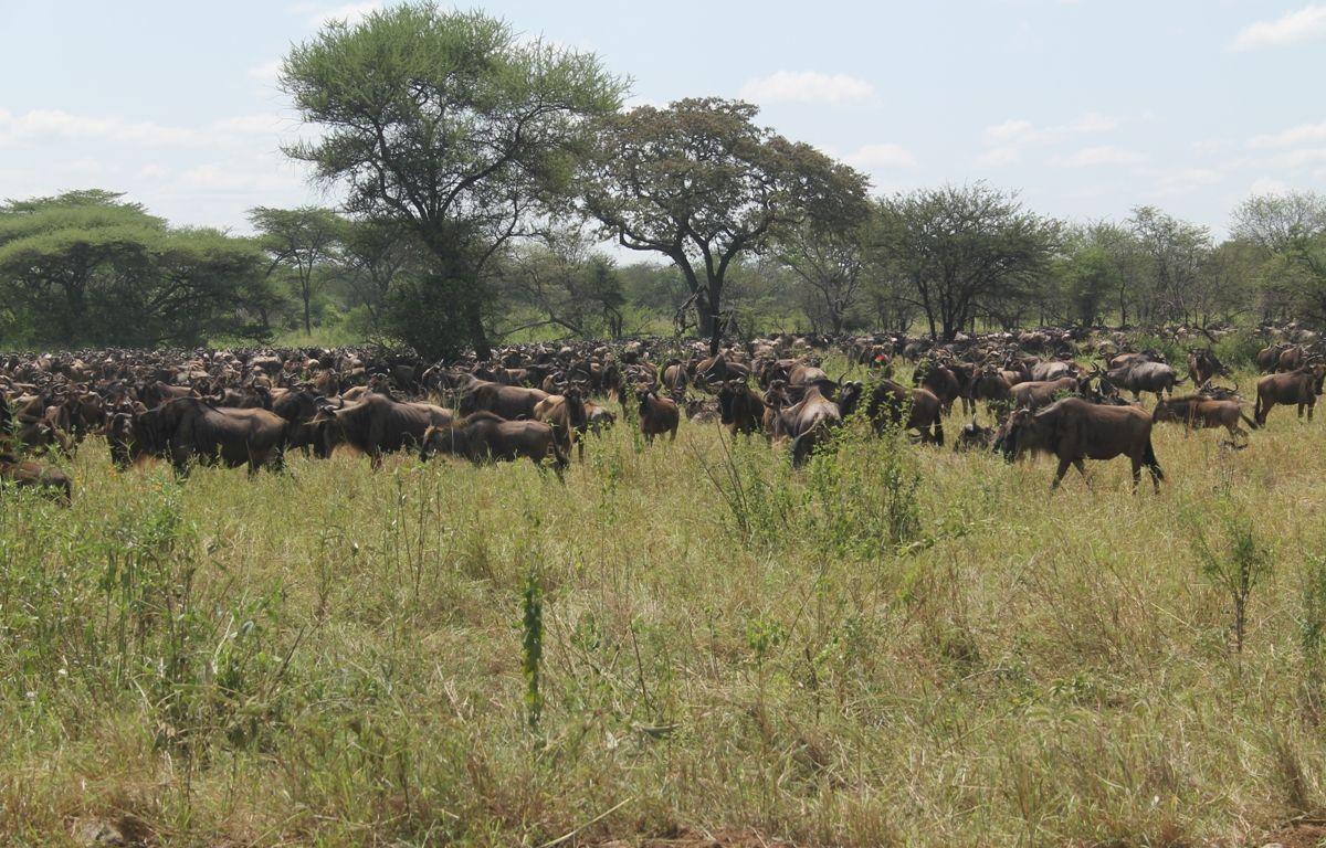 Serengeti and Ngorongoro Safari, 6 Days