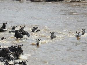4 Days Ngorongoro Crater and Manyara Safari Tour