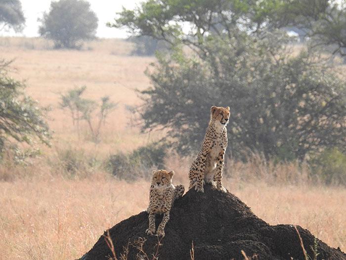 Ngorongoro Wildlife Tour