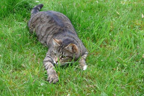 Les chats SP1280365