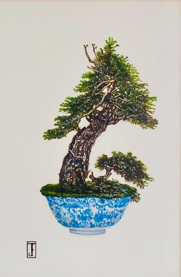 Douglas Fir Bonsai : douglas, bonsai, Herman,, Douglas-Fir, Bonsai, Byard
