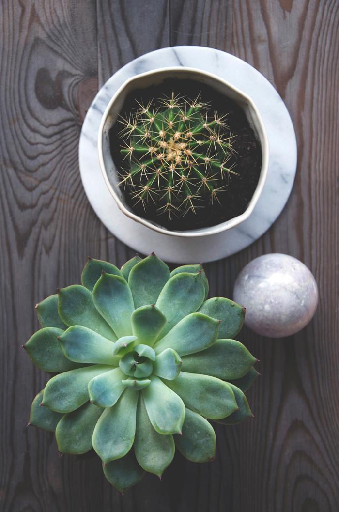 Sukulent-cactus-marble-wood-web2
