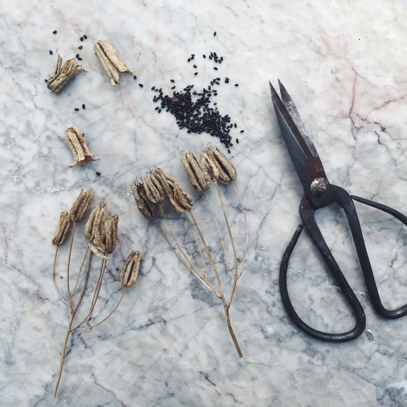 akeleje-froe-froesamling-sensommer-glaede-seeds-byblikfang