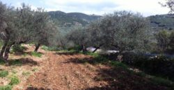 Land for Sale Ain Kfaa Jbeil Area 1450Sqm